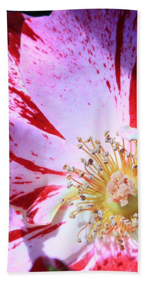 Floral Hand Towel featuring the photograph Red And White Speckled Flower by Donna Corless