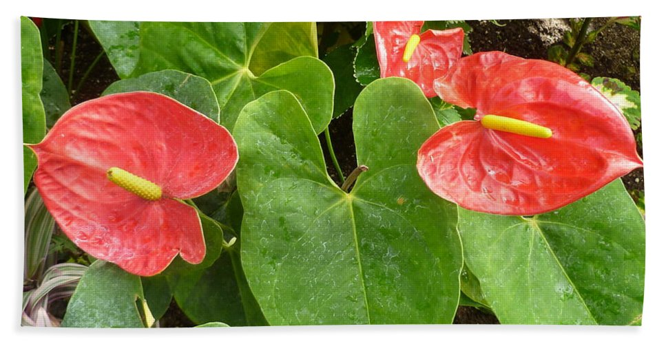 Flower Macro Hand Towel featuring the photograph Red Anthurium by Lingfai Leung