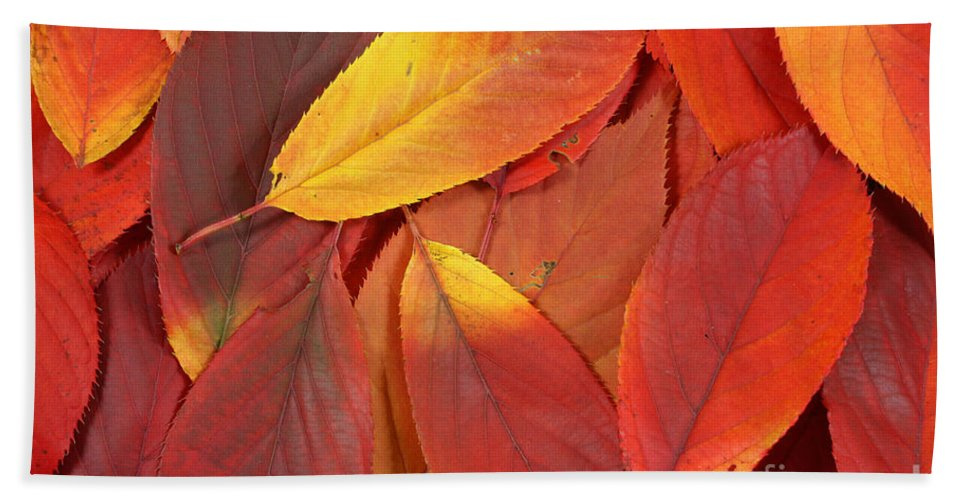 Leaves Hand Towel featuring the photograph Red Autumn Leaves Pile by Simon Bratt Photography LRPS
