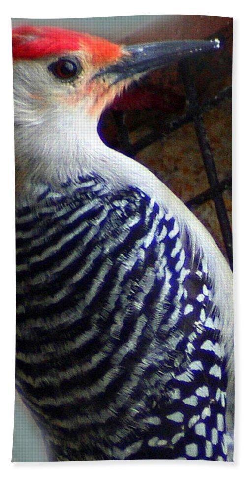 Red-bellied Woodpecker Bath Sheet featuring the photograph Red Bellied Woodpecker by Laurel Talabere