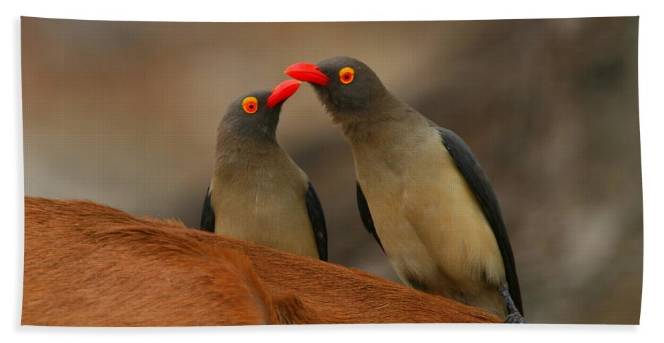Oxpecker Bath Sheet featuring the photograph Red-billed Oxpeckers by Bruce J Robinson