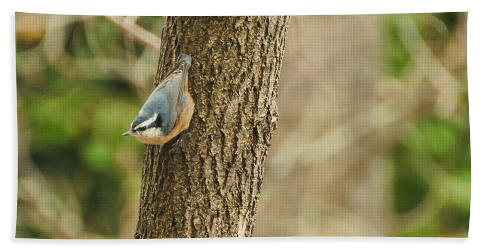 Birds Hand Towel featuring the photograph Red-breasted Nuthatch by Cheryl Baxter