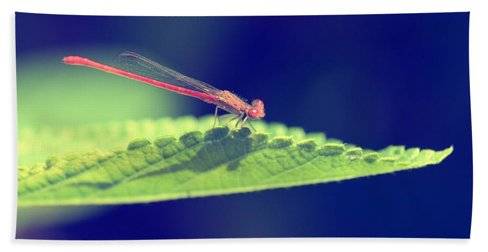 Damselfly Bath Sheet featuring the photograph Red Damselfly by Betty LaRue