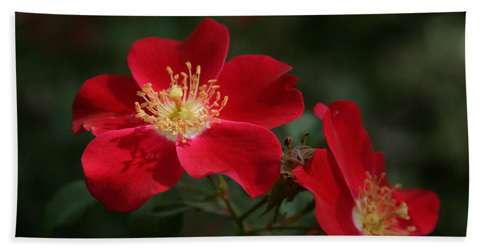 Red Flowers Bath Sheet featuring the photograph Red Flowers by Douglas Barnard