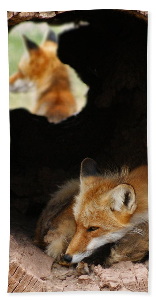 Red Fox Dreaming Bath Sheet featuring the photograph Red Fox Dreaming by Ernie Echols