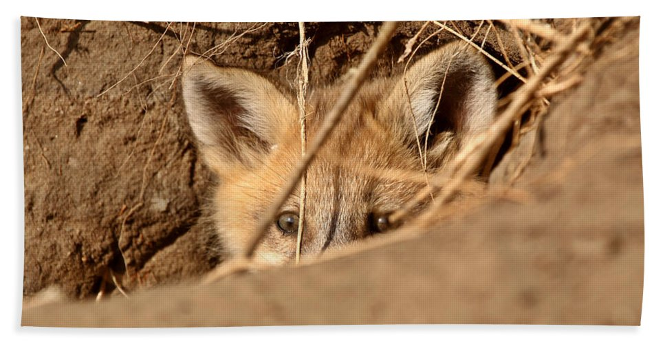 Abandoned Bath Sheet featuring the photograph Red Fox Pup Peaking Out Of Den by Mark Duffy