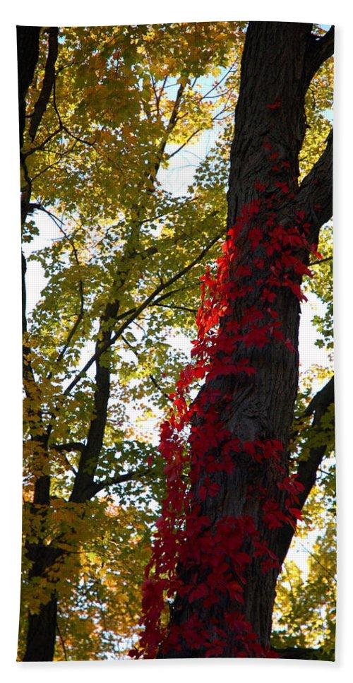 Usa Bath Sheet featuring the photograph Red Ivy Climb by LeeAnn McLaneGoetz McLaneGoetzStudioLLCcom