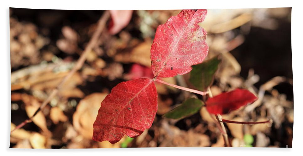 Red Bath Sheet featuring the photograph Red Leaves by Henrik Lehnerer