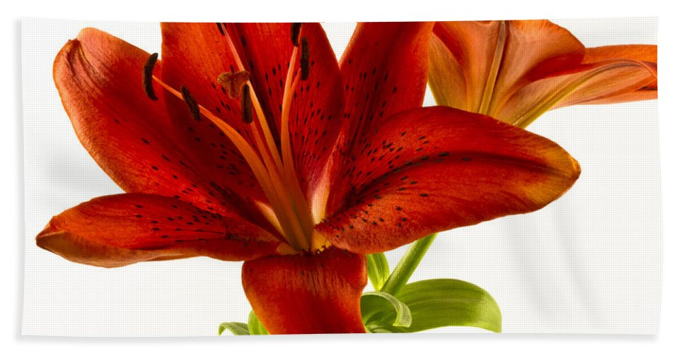 Lily Bath Sheet featuring the photograph Red Lily Number One Square by Bill Swindaman