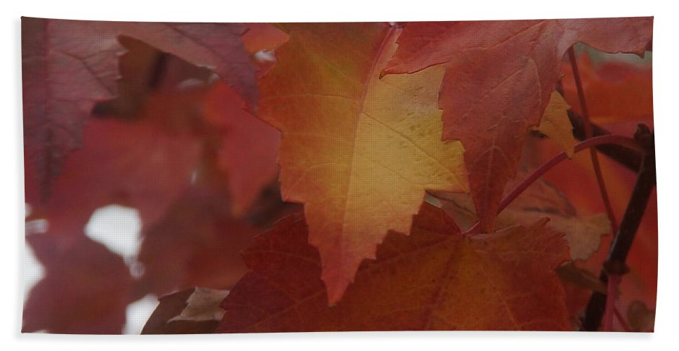 Red Hand Towel featuring the photograph Red Maple With A Splash Of Gold by Mick Anderson