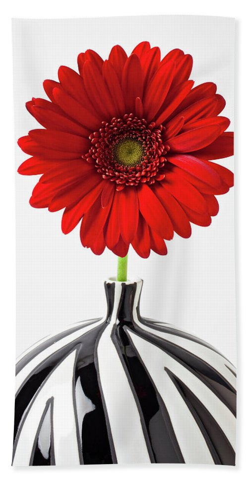 Mums Flowers Chrysanthemums Bath Sheet featuring the photograph Red Mum In Striped Vase by Garry Gay