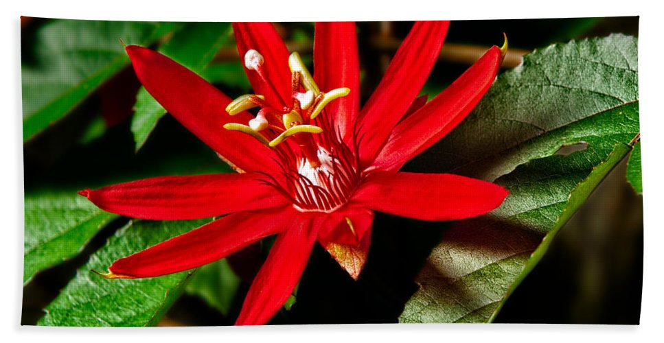 Flower Bath Sheet featuring the photograph Red Passion by Christopher Holmes