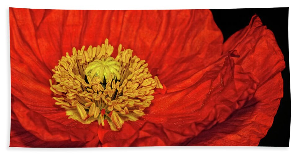 Poppy Bath Sheet featuring the photograph Red Poppy by Dave Mills