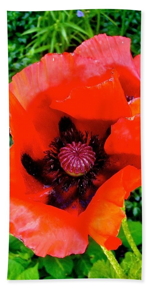 Poppy Bath Sheet featuring the photograph Red Poppy by Stephanie Moore