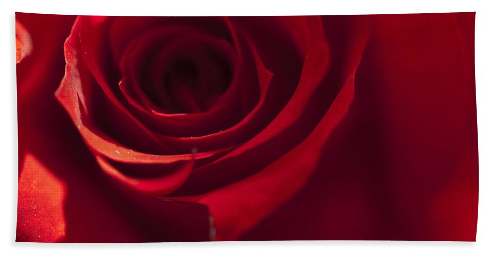 Red Rose Bath Sheet featuring the photograph Red Rose Close Up by Steve Purnell