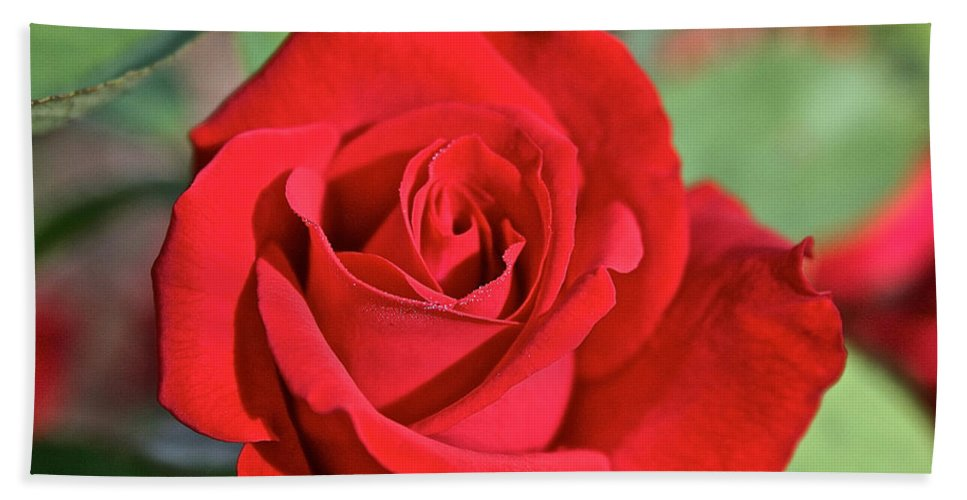 Plant Bath Towel featuring the photograph Red Rose by Susan Herber