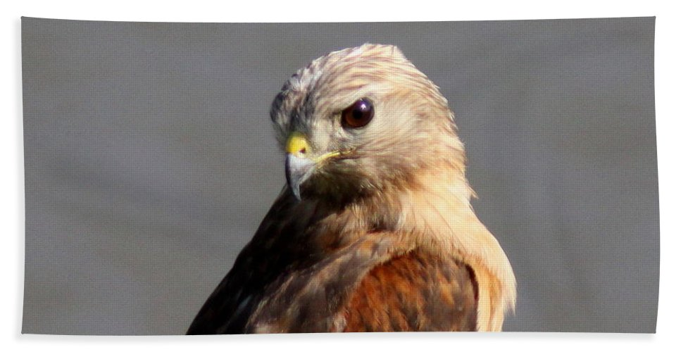 Red-shouldered Hawk Bath Sheet featuring the photograph Red-shouldered by Travis Truelove