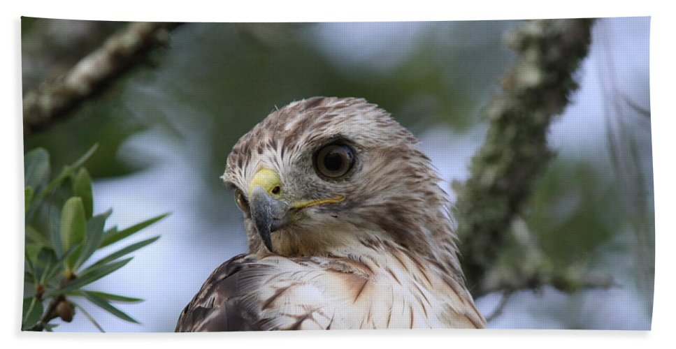 Raptor Bath Sheet featuring the photograph Red-tailed Hawk Has Superior Vision by Travis Truelove