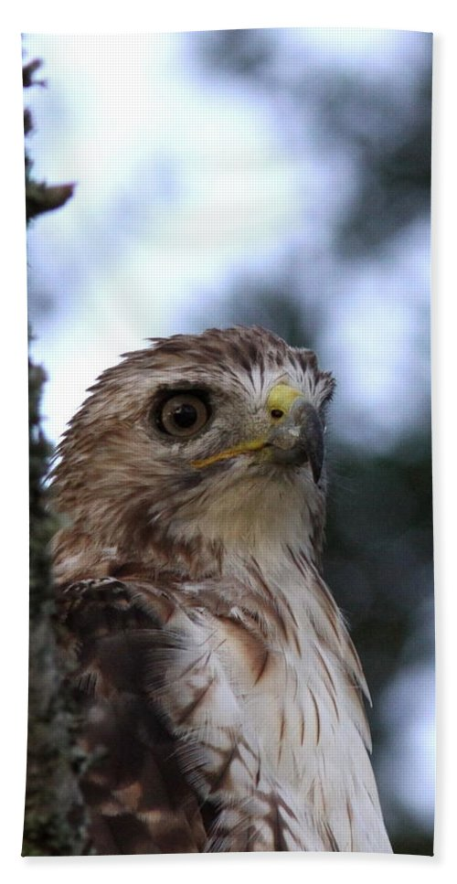 Red-tailed Hawk Bath Sheet featuring the photograph Red-tailed Hawk - Hawkeye by Travis Truelove