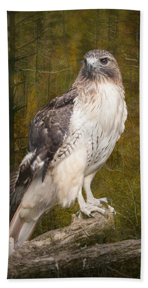 Art Bath Sheet featuring the photograph Red Tailed Hawk Perched On A Branch In The Woodlands by Randall Nyhof