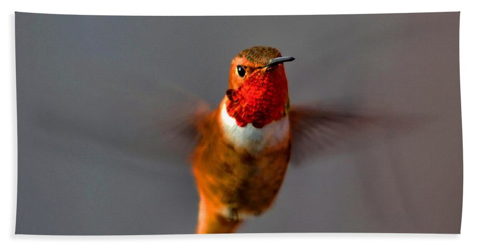 Hummingbird Bath Sheet featuring the photograph Red Throated Golden Hummingbird by Tommy Anderson