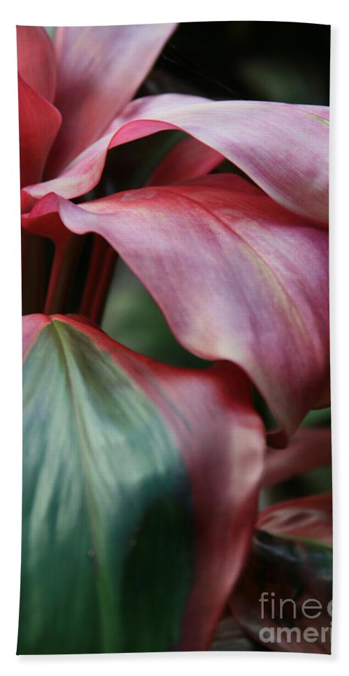 Aloha Bath Sheet featuring the photograph Red Ti - Cordyline Terminalis by Sharon Mau