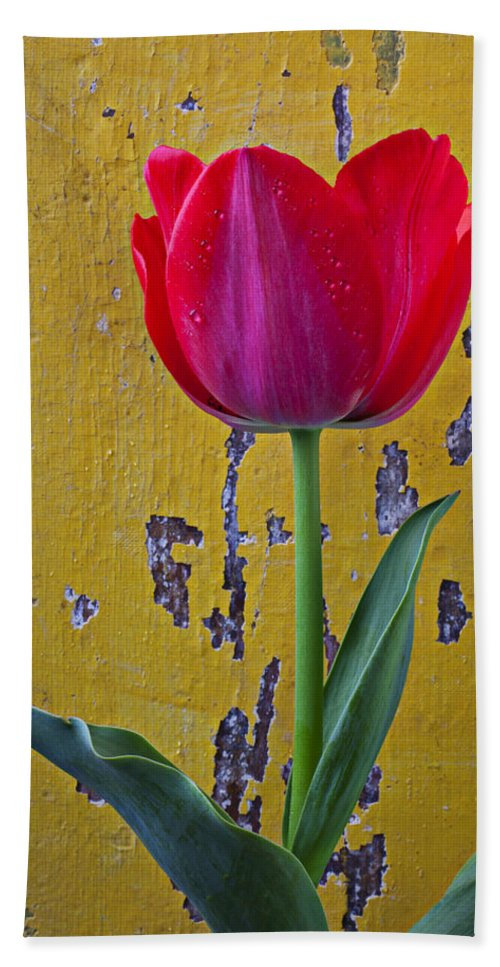Red Bath Sheet featuring the photograph Red Tulip With Yellow Wall by Garry Gay