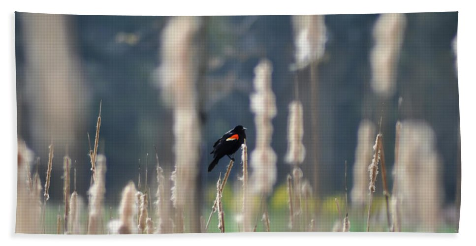 Redwinged Blackbird Hand Towel featuring the photograph Redwinged Blackbird by Bill Cannon