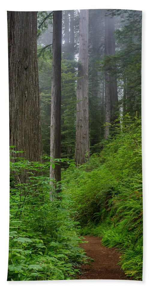 Redwoods Hand Towel featuring the photograph Redwoods Along Ossagon Trail by Greg Nyquist
