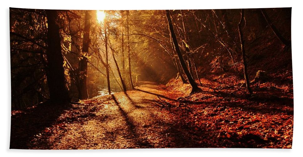 Sunburst Hand Towel featuring the photograph Reelig Sun by Gavin Macrae
