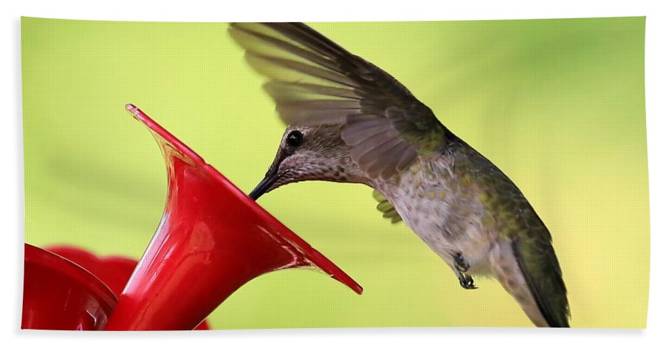 Hummingbird Hand Towel featuring the photograph Refreshing Dip by Carol Groenen