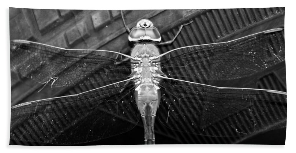 Dragonfly Hand Towel featuring the photograph Resting Dragon by David Lee Thompson