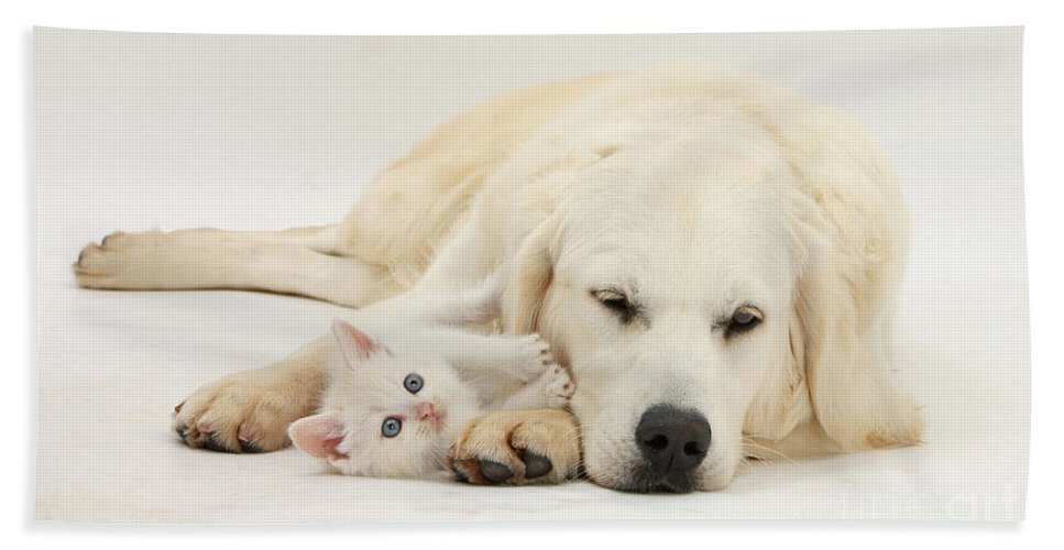 Dog Hand Towel featuring the photograph Retriever With Friendly Kittens by Mark Taylor