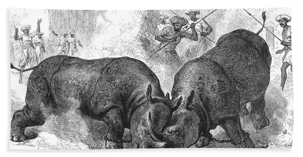 1875 Hand Towel featuring the photograph Rhinoceros Fight, 1875 by Granger