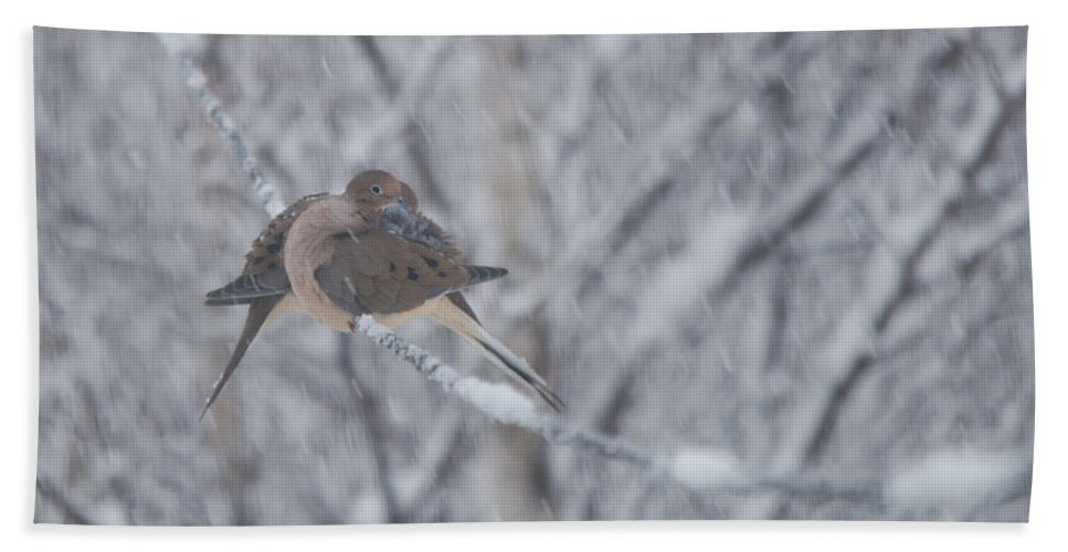 Mourning Doves Bath Sheet featuring the photograph Riding The Storm Out by Susan Capuano
