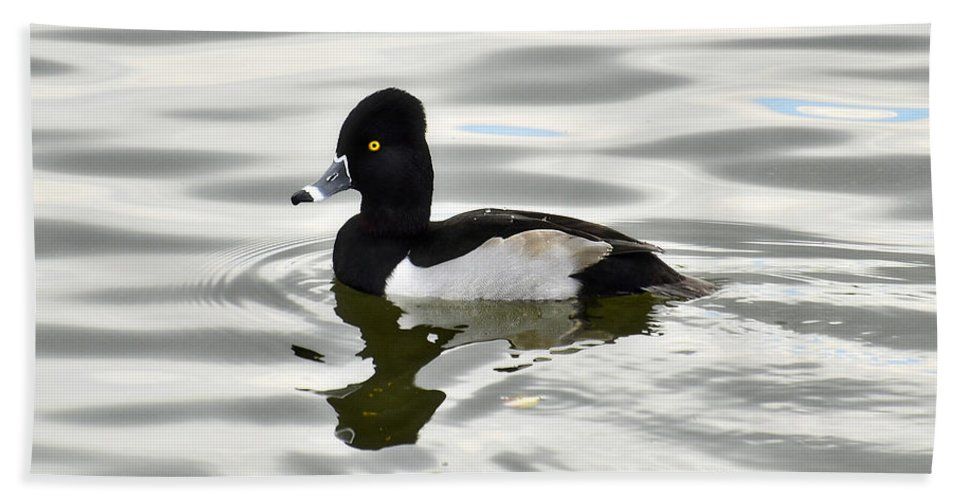 Ring Necked Duck Bath Towel featuring the photograph Ring Necked Duck by Saija Lehtonen