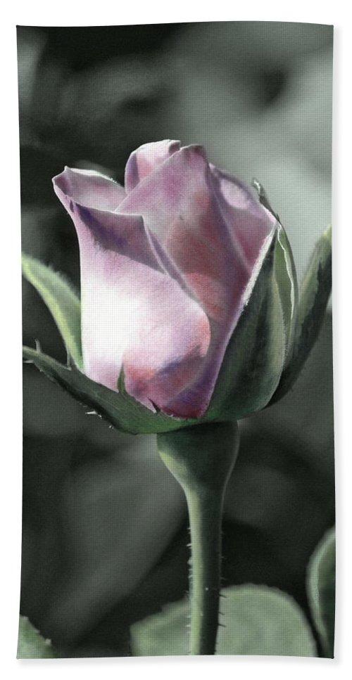 Florals Bath Sheet featuring the photograph Rita Rose by Linda Dunn
