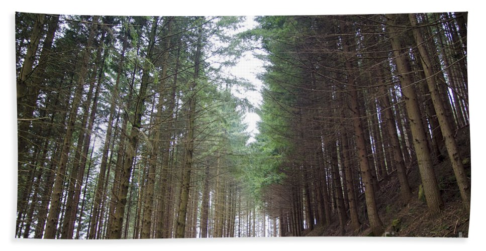 Road Bath Sheet featuring the photograph Road In The Forest by Mats Silvan