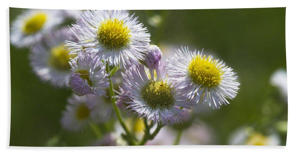 Robins Plantain Bath Sheet featuring the photograph Robin's Plantain - Alabama Wildflowers by Kathy Clark