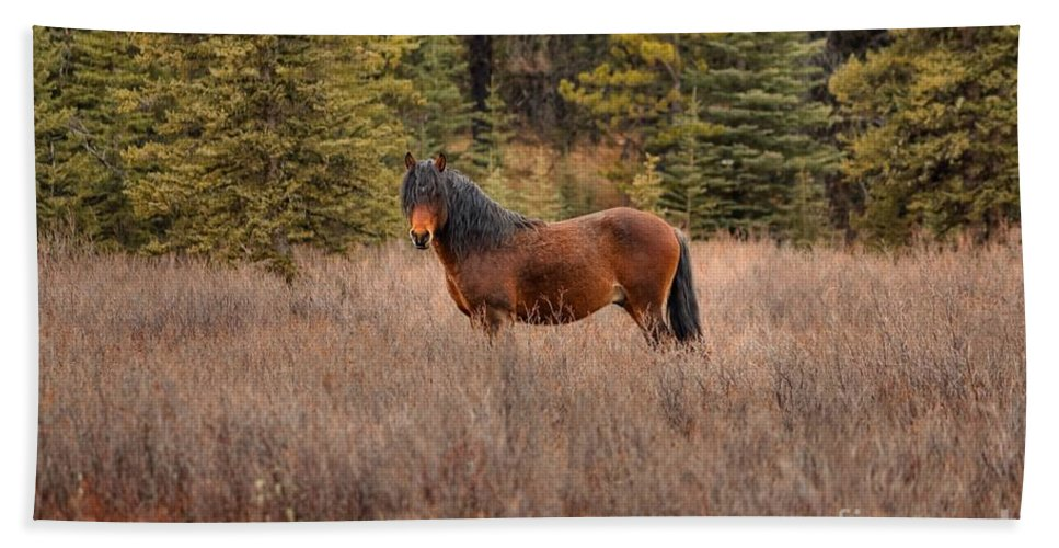 Bachelor Stallion Bath Sheet featuring the photograph Rock Star by James Anderson