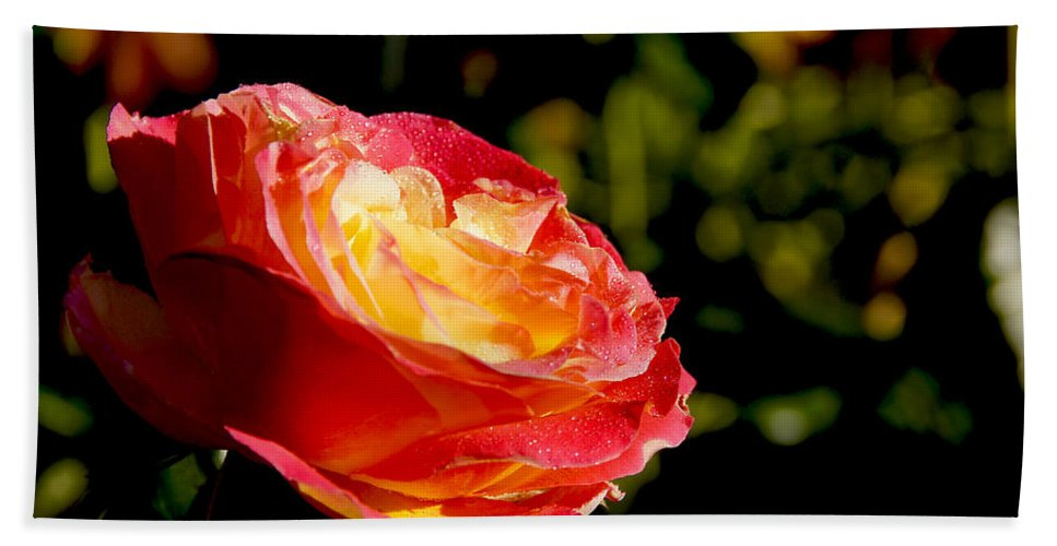 Rose Hand Towel featuring the photograph Rose After A Rain Shower by Mick Anderson