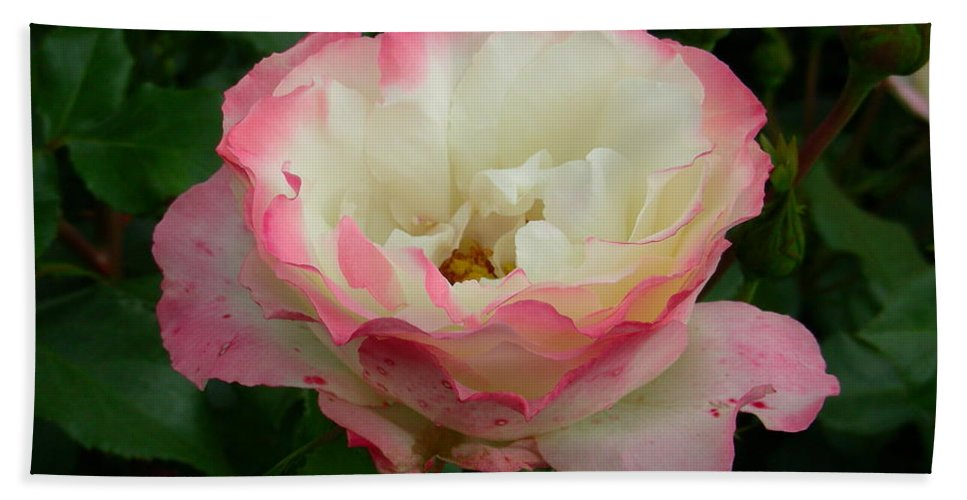 Rose Bath Sheet featuring the photograph Rose by Mark Gilman