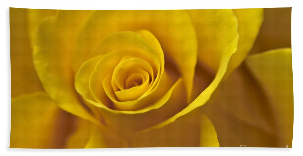 Rose Hand Towel featuring the photograph Rose Poetry by Heiko Koehrer-Wagner