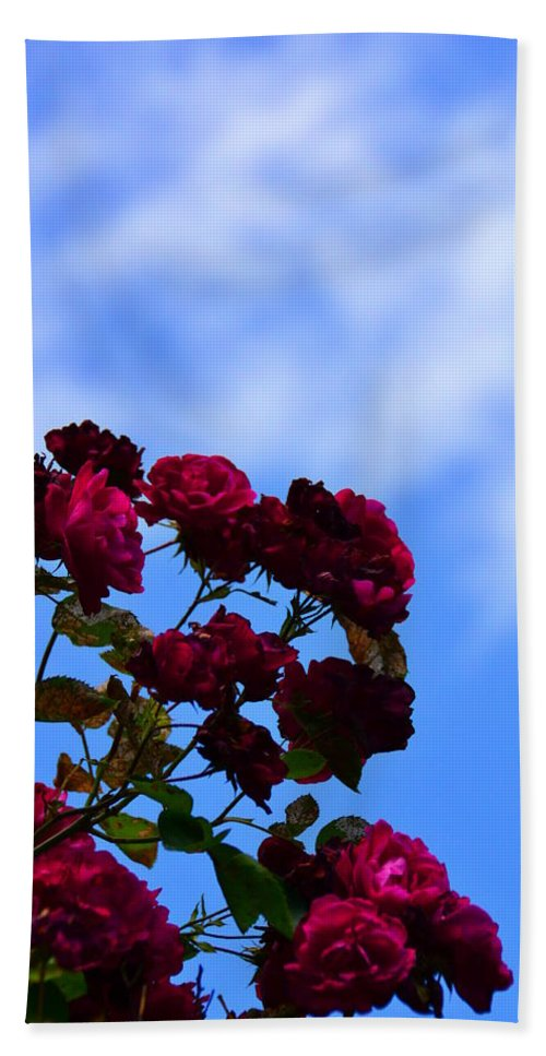 Rose Bath Sheet featuring the photograph Roses In The Sky by Bonnie Myszka