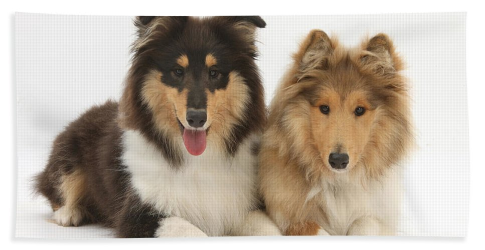 Animal Hand Towel featuring the photograph Rough Collies by Mark Taylor