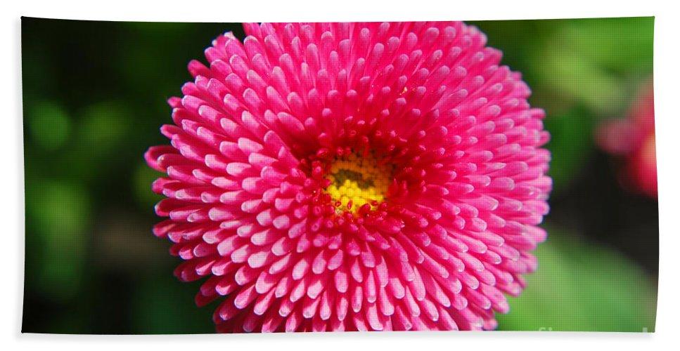 Yhun Suarez Hand Towel featuring the photograph Round Pink Flower by Yhun Suarez