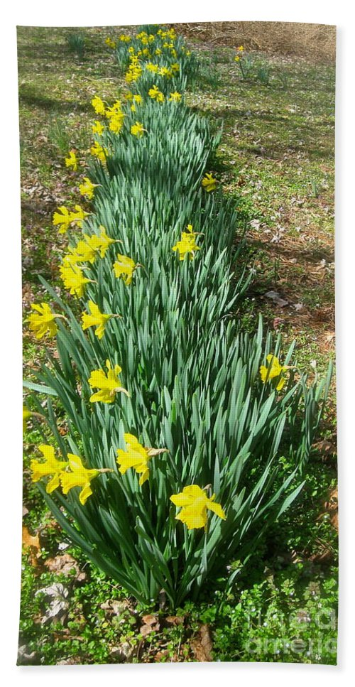 Row Of Daffodils Bath Sheet featuring the photograph Row Of Daffodils by Nancy Patterson
