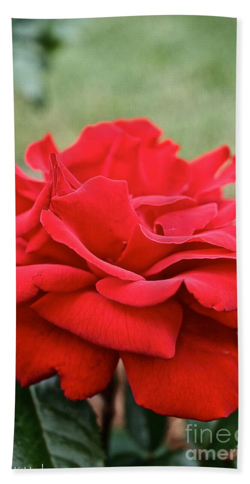 Garden Bath Sheet featuring the photograph Royal Red Rose by Susan Herber