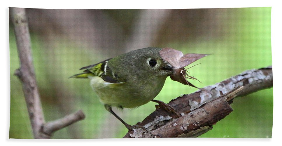 Ruby-crowned Kinglet Bath Sheet featuring the photograph Ruby-crowned Kinglet Nabs A Moth by Barbara Bowen