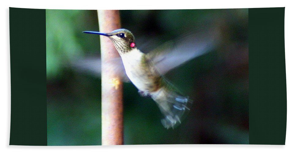 Ruby-throated Hummingbird Bath Sheet featuring the photograph Ruby Throated Hummer In Flight by Laurel Talabere
